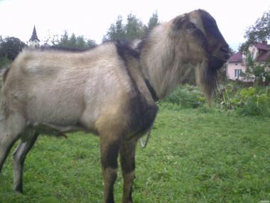 Kozy  La Mancha