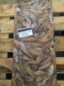 Ryby świeżo mrożone babka