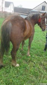 Konie ciężkie  Włodzimierska