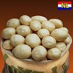 Sadzeniaki ziemniaków, roko