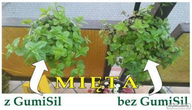Organiczne Stymulatory Wzrostu Roślin GUMISIL zapłać po przetestowaniu