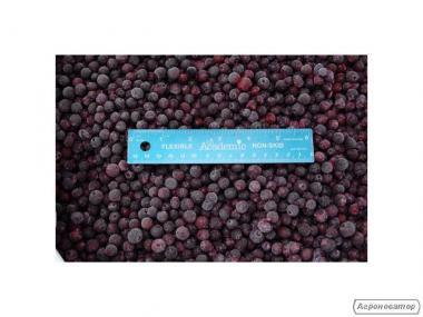 Mrożona dzika czarna jagoda