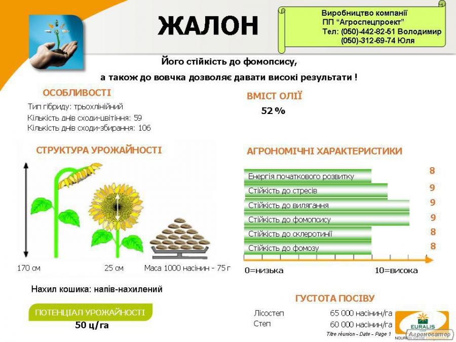 Nasiona słonecznika, zhalon
