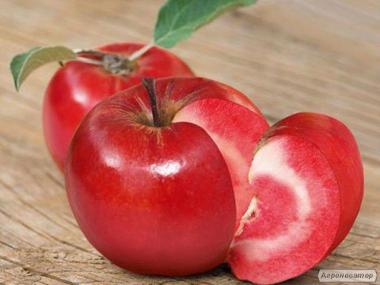 Sadzonki jabłoni, eliza