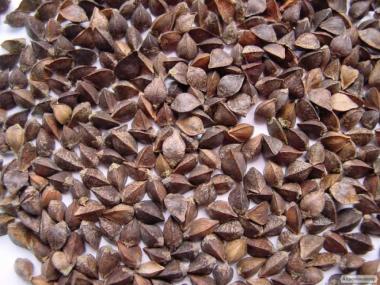 Nasiona gryki, dikul