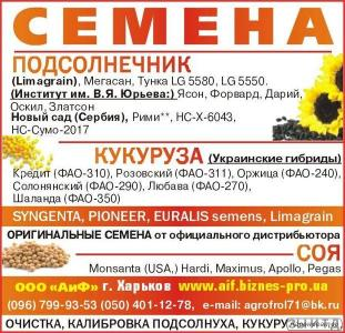 Nasiona kukurydzy, gibrid lyubava 279 mv