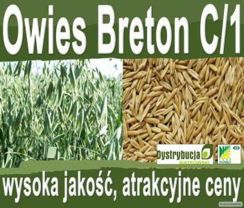 Nasiona siewne owsa Breton C/1