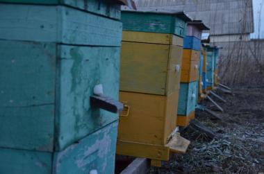 Rodziny pszczele