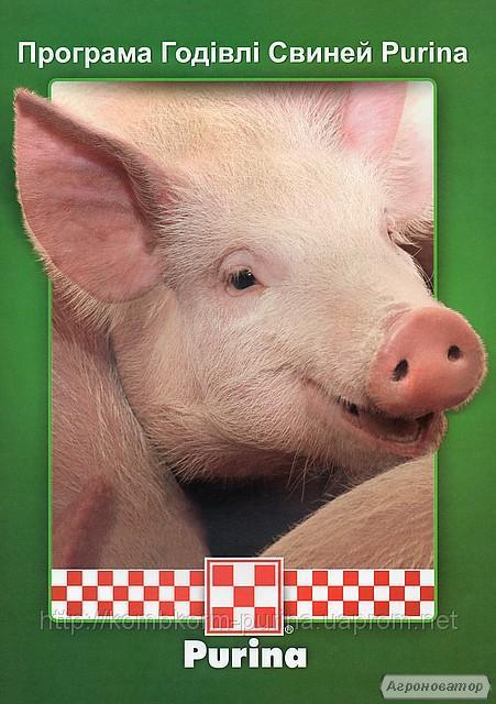 Kiszonki kombinowane dla świń