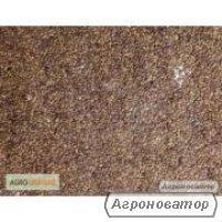 Nasiona koniczyny łąkowej (czerwonej), mironvskiy