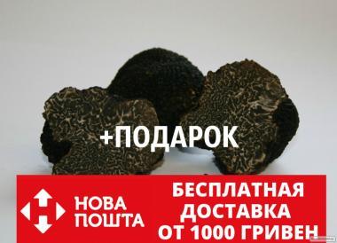 Grzybnia trufli czarnozarodnikowej