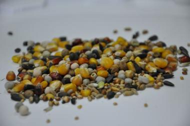 Mieszanka dla gołębi i innych ptaków z kukurydzą 1kg