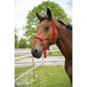Halter dla konia - różne kolory