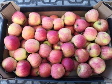 Sprzedam jabłka z Polski