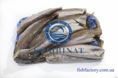 Ryby morskie Babka