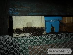 odkłady pszczele 7-8 ramkowe