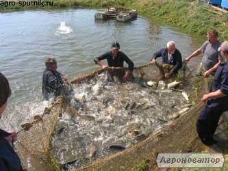 Ryby słodkowodne Tołpyga