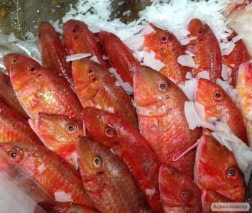Ryby świeżo mrożone barbaty