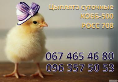 Kury brojlery rOSS-708