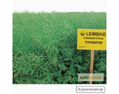 Nasiona rzepaku ozimego, chempion ukrainy