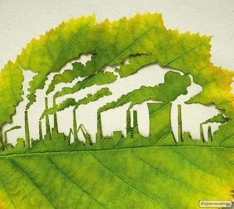 Brykiety drzewne z trocin