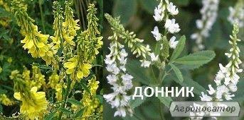 Inne rośliny paszowe