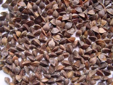 Nasiona gryki, slobozhanka